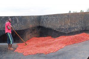 Batian Kenya Ruby